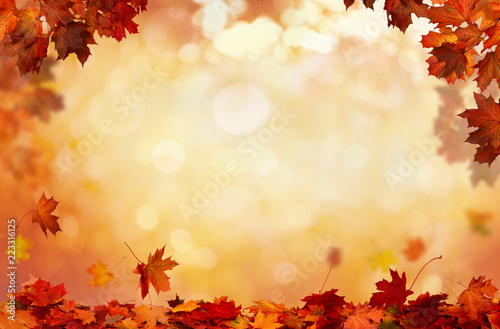 Obraz Beautiful  landscape . Colorful foliage in the park. Falling  leaves natural background . - fototapety do salonu