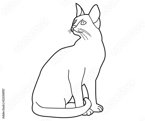 sketch of a cat sitting on a white background , Buy this