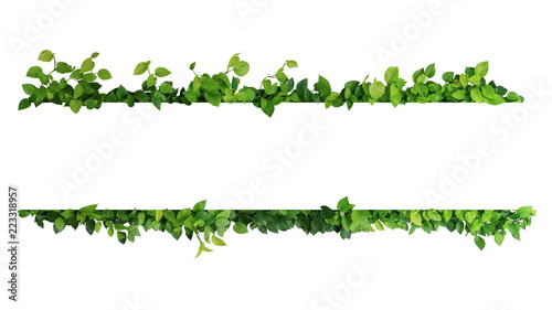 Foto op Canvas Planten Green leaves nature frame border of devil's ivy or golden pothos the tropical foliage plant on white background.