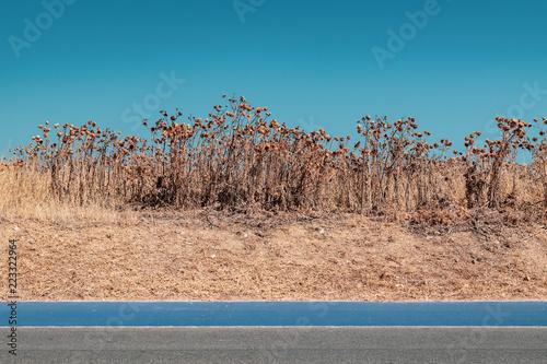 algarve road landscape