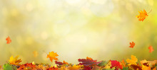 Autumn Maple Leaves .Beautiful Autumn Landscape With сolorful Foliage. Falling Leaves Natural Background