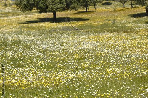 Spring landscape of extremadura landscape near the village of Valencia de Alcantara,Caceres province, extremadura, Spain