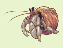 Little Cute Hermit Crab Illust...