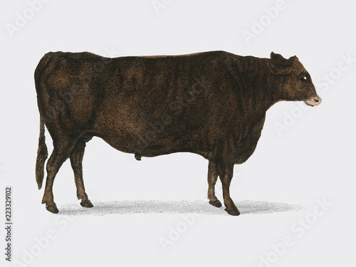 Animated Nature (1855), a portrait of an ox Wallpaper Mural