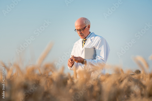 Fotografía  Researcher doing field test on new kinds of grain and wheat in outdoor research