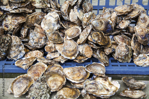 frische Austern