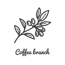 Coffee Branch Icon. Coffee Pla...