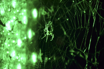 eerie spider in green light to halloween