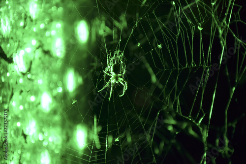 eerie spider in green light to halloween