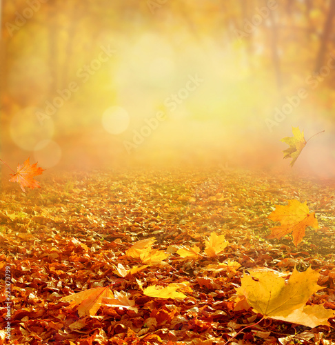 Stickers pour portes Orange eclat Beautiful autumn landscape with yellow trees and sun. Colorful foliage in the park. Falling leaves natural background