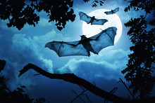 These Creepy Bats Fly In On Halloween Night With A Full Moon Behind Them.