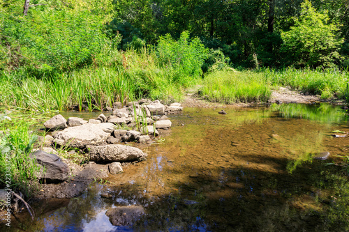 Small river in green forest at summer