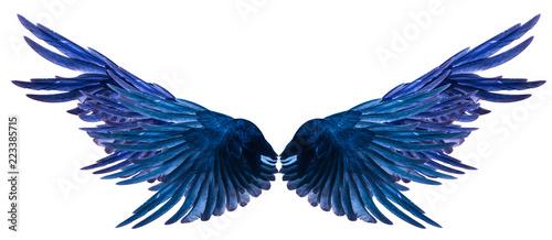 Vászonkép Blue Wing on a white background.