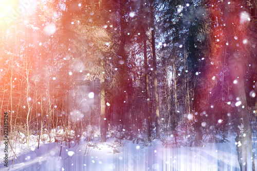 Tuinposter Crimson Winter forest on a sunny day. Landscape in the forest on a snowy