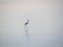 Shot Of Flamingos In A Summer Sunset At Granelli Natural Reserve Park. Sicily, Italy
