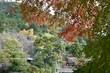 紅葉の京都龍安寺