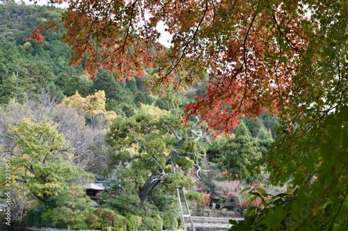 Foto op Canvas Zen 紅葉の京都龍安寺