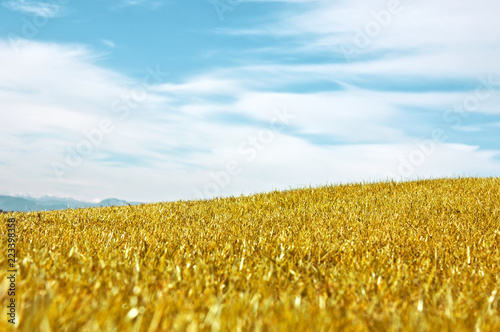 Fotobehang Cultuur Autumn landscape. Yellow field meadow and blue sky