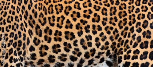 Aluminium Prints Leopard Detail skin of leopard.
