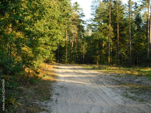 Spoed Foto op Canvas Weg in bos Leśna droga