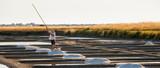 Marais salant sur l'île de Noirmoutier