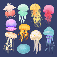 Ocean Jellyfish Bright Set On ...