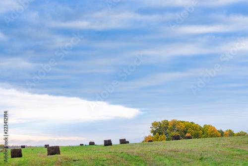 Foto op Aluminium Platteland Field of freshly bales of hay with trees