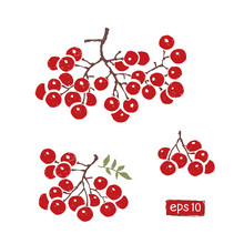 A Branch Of Red Rowan Berries Isolated, Vector