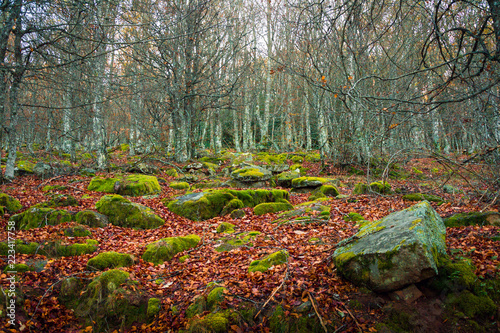 Photo  Autumn landscape beech Ujaperos forest