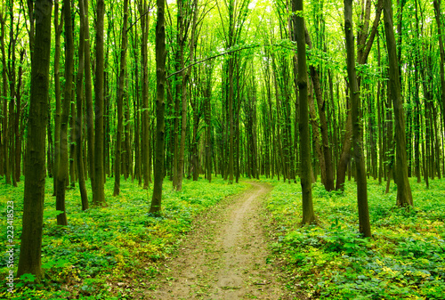 Path in green forest #223418523