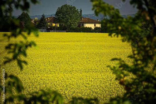 Fotografie, Obraz  campo fiorito