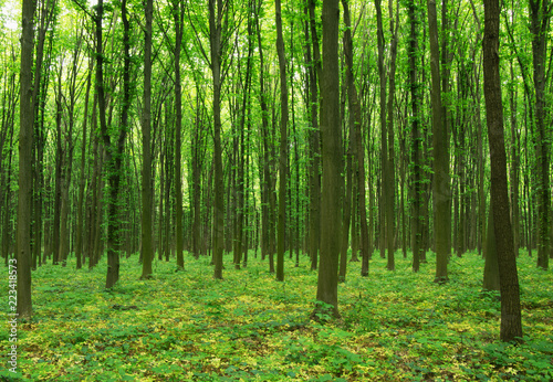 forest trees. nature green wood sunlight backgrounds. #223418573