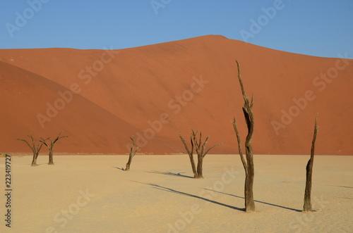 Spoed Foto op Canvas Droogte Dead Vlei in Namib desert, Namibia, Africa