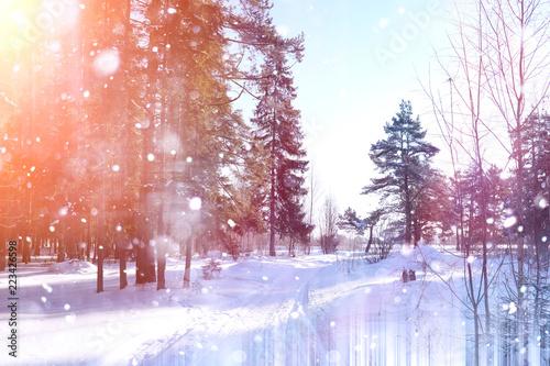 Fototapeta Winter forest on a sunny day. Landscape in the forest on a snowy obraz na płótnie