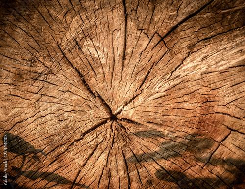 Obraz struktura ściętego drzewa - fototapety do salonu