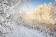 Frosty Winter Scene. Winter Landscape In Morning Frost. White Hoarfrost On Plants And Branches Of Trees. Christmas Background. Cold Snowy Nature On Bright Sunny Day. Xmas Time. Natural Winter Scene.