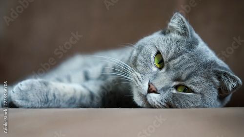 Occhi di gatto Fototapeta