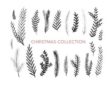 Collection Of Hand Drawn Fir B...