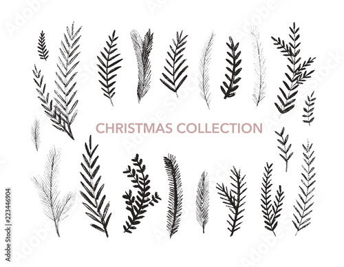 Fototapeta Collection of hand drawn fir branches. Botanical elements. Vector elements of plants. obraz