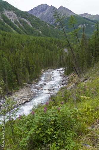 Altai Mountains. The Shawla River. Siberia, Russia.
