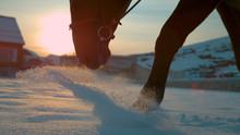 CLOSE UP: Horse Walking Trough Fresh Snow Blanket At Winter Sunrise
