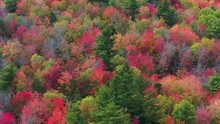 Colorful New England Autumn Fo...