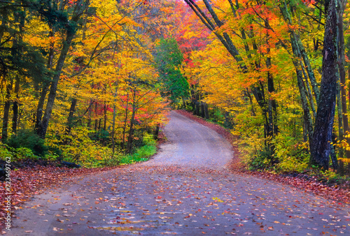 Photo Fall Colours at Algonquin, Ontario along a winding road