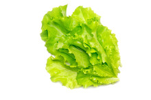 Lettuce Leaves On White Backgr...