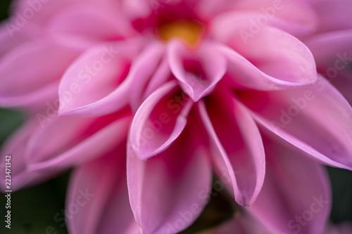 kwiat-makro-z-bliska