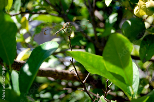 Fotografie, Obraz  Dragonfly on branch