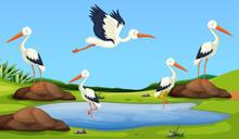 Egret Migration To The Pond