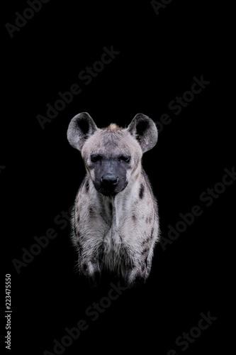 Poster Hyène Close up Hyena isolated on black background