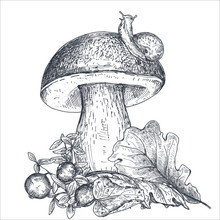 Vector Composition Of Hand Drawn Forest Mushroom With Fall Leaves, Snail, Cranberry
