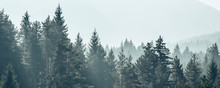 Pine Trees Forest Stylized Sil...